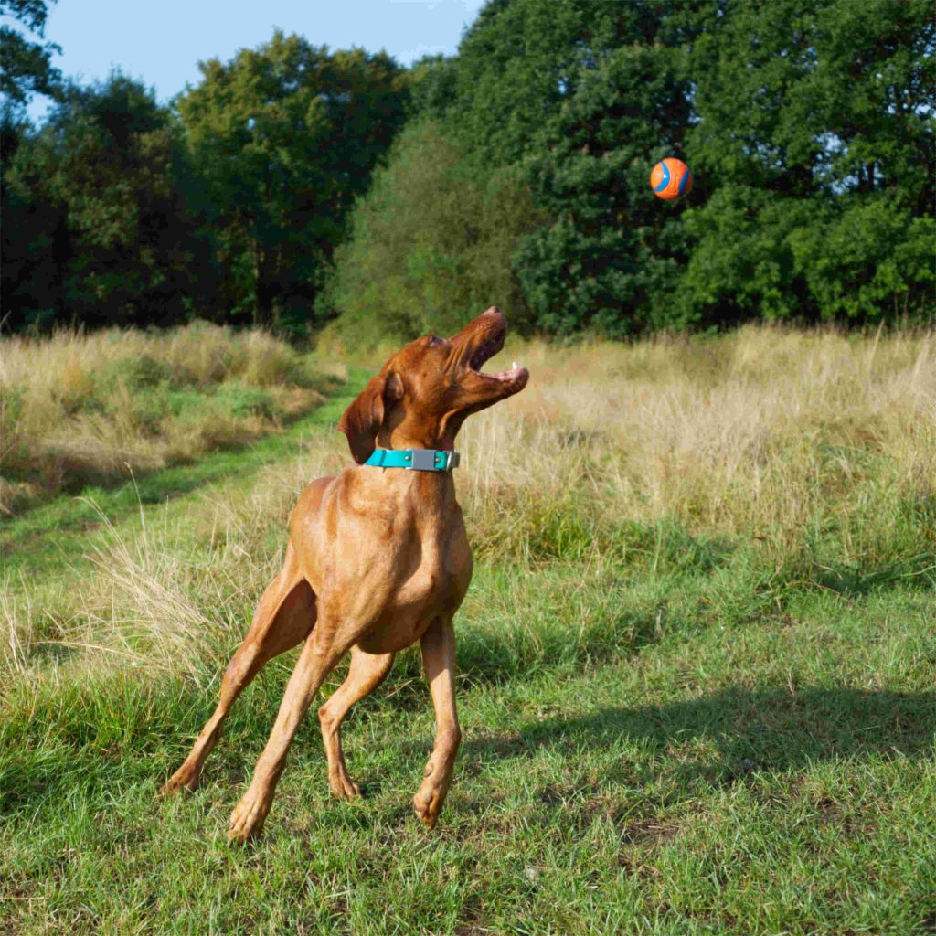 Fun dog photo shoots in Surrey